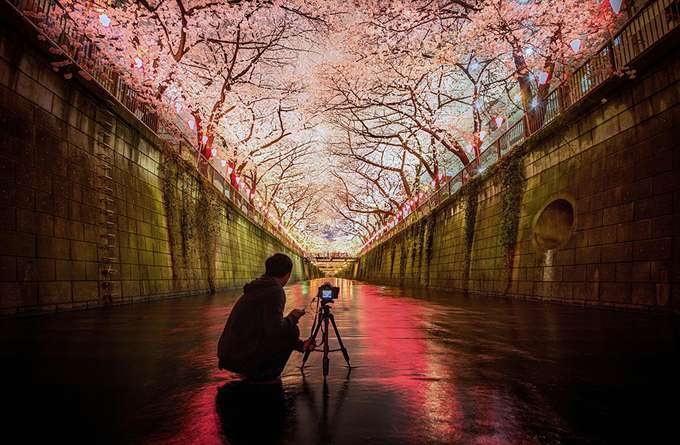 2014-japanese-cherry-blossom-blooming-sakura-22